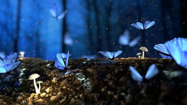 współwystępowanie motyli i kwiatów