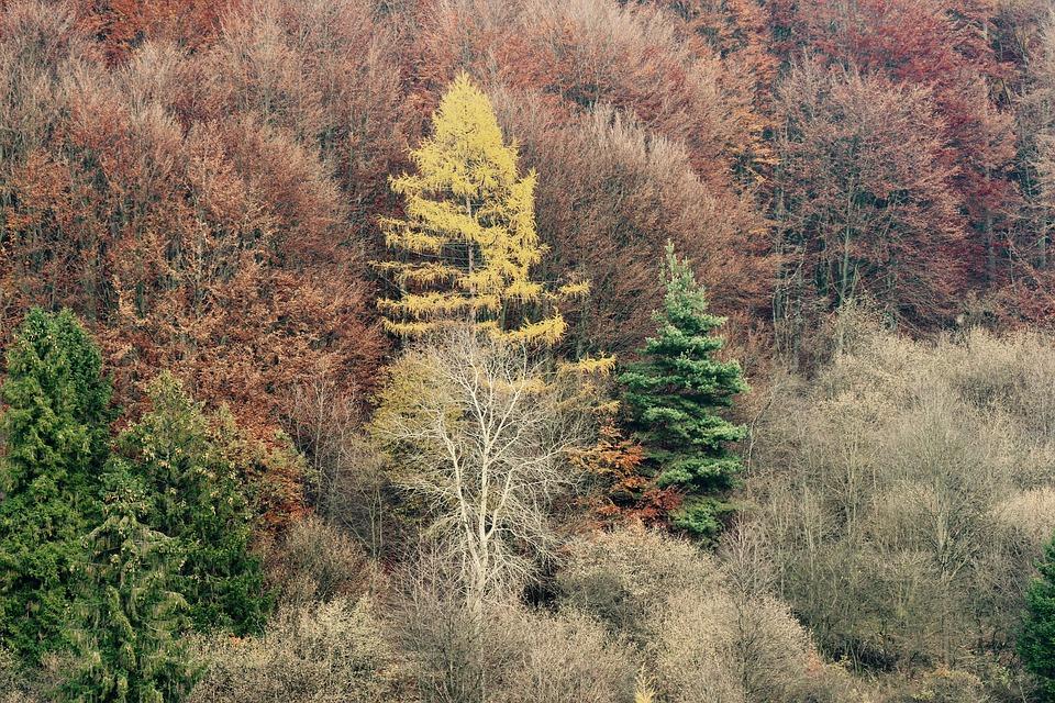 Las, chętnie w nim zamieszkują ptaki